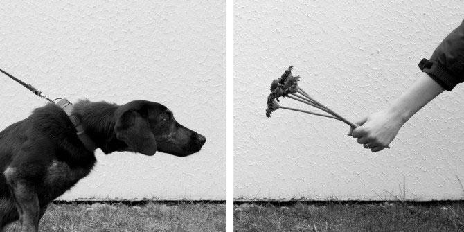 Cara ungkap dan tutur dalam fotografi